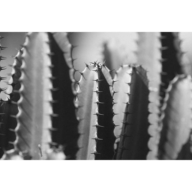 + Latest instagram